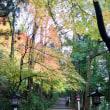 2017年11月23日 白山比咩神社