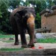 敬老の日にちなみ長寿動物に好物をプレゼント・天王寺動物園。  17・9月18日