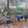 庭に水撒き
