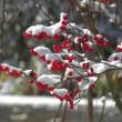 初雪 三度目の浅間の冠雪を超えて里に雪がふる