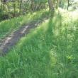 春の雨 進む新緑