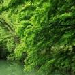 北伊奈ヶ湖