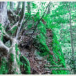 苔むす岩に根を張る木