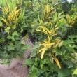 観葉植物の寄せ植え & 秋の商品が・・・!?!?