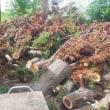 170805 伐採木回収後山チャリ