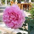 フラリエの薔薇ー5