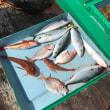 漁市丸のブログを見て下さってる皆さんにお願いです‼️