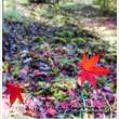 紅葉  森林セラピー基地「くつろぎの森 グリーンピア八女」