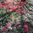 彼岸花の咲く公園にいってきたよ!