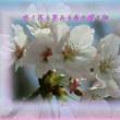 フォト575交心zqz1505『 咲く花も笑みも命の贈り物 』