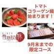 春夏秋豚横浜さんInstagram
