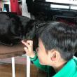 黒猫ジジィと一緒に写真を・・はじめてのおつかいじゃなくて・・