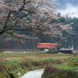 桜とタラコ