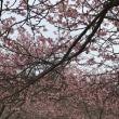 やっと春だあ