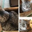 猫って箱が好き♪(๑ᴖ◡ᴖ๑)♪