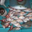 12月の魚釣り