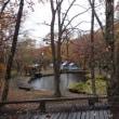 鹿沢の紅葉はまもなく終了、季節は冬に向かいます。