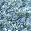 1/22 13時ごろ外はこんなに雪が