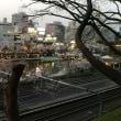 靖国神社と東京の桜