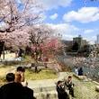 桜 平和公園