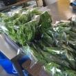 生野菜が食べたい