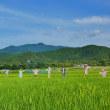 嵐山渡月橋、落柿舎、二尊院、北嵯峨野、広沢池