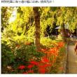 萩の寺(H29.9.24)
