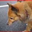 犬の国の花火大会