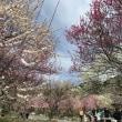 デローザでいなべ市梅林公園〜二之瀬峠