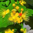 華やかな胡蝶蘭の日光浴。