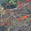 小笠原の旅物語 8 旅を想う