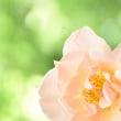 並木イズムを学ぶ① /柔らかい花の撮影