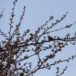 「花と鳥」とスタンデング