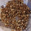 コーヒー生豆のピッキング