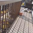 藤棚の蔓を切ったり、茗荷を植え替えようと場所作りを開始。頑張りました。