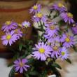 「おはようの花」 野路菊藍空