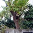 樹上の猫 Le chat sur l'arbre.
