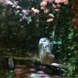 ハウステンボス「フクロウの森」で癒される