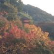 京都 東福寺 通天峡