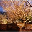 冬桜と紅葉の城峯公園