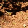 晩秋の木漏れ日の野を歩きました