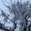 横浜も雪でした