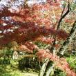 秋の奈良に行って来ました。