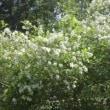 長居公園に 季節の花を訪ねて