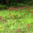 庚申山に咲く小さな花を求め ~山頂に至り~