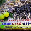 11/18・・・旅サラダプレゼント(本日正午まで)