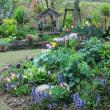 毎日変わる庭の様子