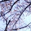 【2拠点生活】上野公園/桜がなくても・・?
