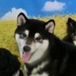 幼稚園体験にきてくれた【コタロウくん】(*^-^*)  犬のしつけ教室@アロハドギー