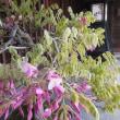 有松駅周辺の花
